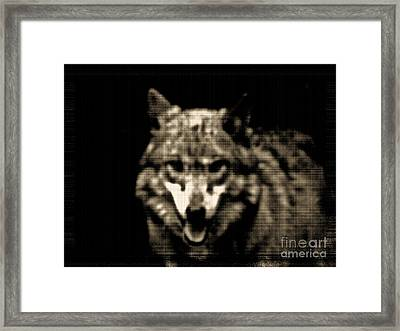 Framed Print featuring the photograph Tinted Wolf by Debra     Vatalaro