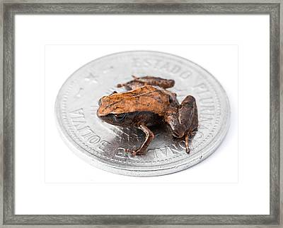 Tiny Adult Frog On Coin Framed Print
