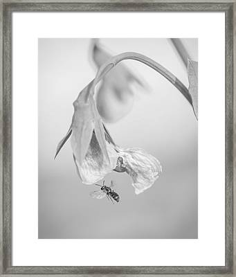 Tiny Bee Around Tiny Pea Framed Print by Len Romanick