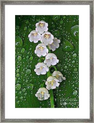 Tiny Bells Framed Print by Robert Pearson