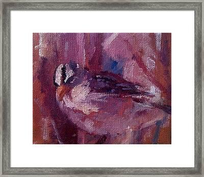 Tiny Bird Study #1 Framed Print by Brian Kardell