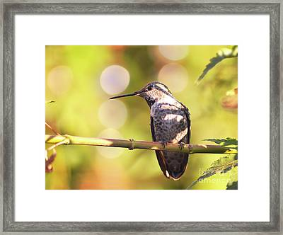 Tiny Bird Upon A Branch Framed Print