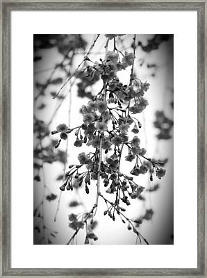 Tiny Buds And Blooms Framed Print