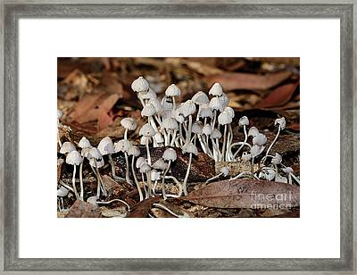 Framed Print featuring the photograph Tiny Corrugated Fungi By Kaye Menner by Kaye Menner