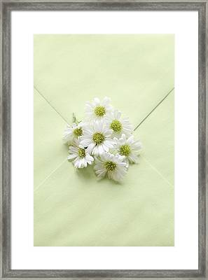 Tiny Daisies On Green Envelope Framed Print