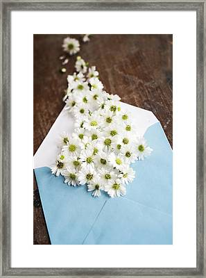 Tiny Daisies Spilling From Blue Envelope Framed Print
