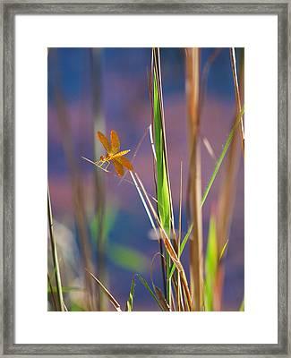 Tiny Dancer Framed Print