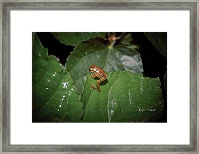 Tiny Escapee Framed Print by DigiArt Diaries by Vicky B Fuller