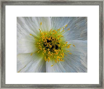 Framed Print featuring the photograph Tiny Explosion by Marilynne Bull