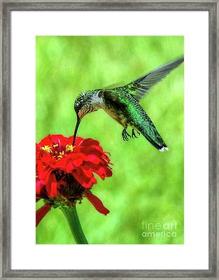 Tiny Feet II Framed Print by Sue Melvin