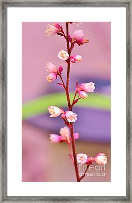 Tiny Flowers Framed Print by Kathleen Struckle