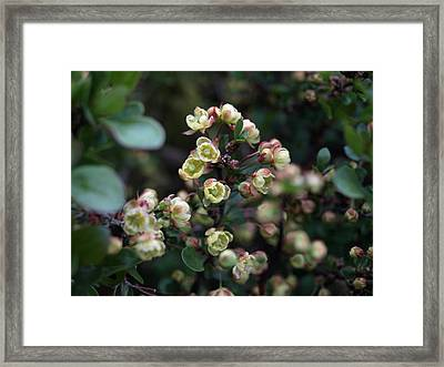 Tiny Flowers Framed Print