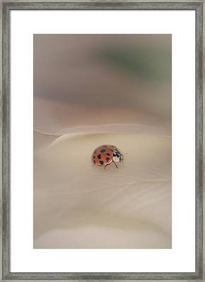Tiny Lady On White Rose Framed Print by The Art Of Marilyn Ridoutt-Greene