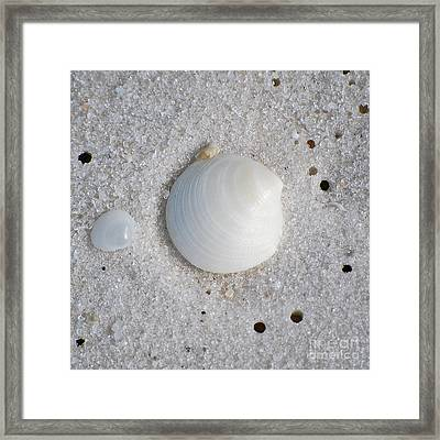 Tiny Pastel Sea Shells In Fine Wet Sand Macro Square Format Framed Print by Shawn O'Brien
