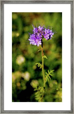 Framed Print featuring the photograph Tiny Puprle Flowers by Onyonet  Photo Studios
