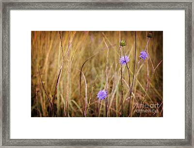 Tiny Purple Flowers In An Autumn Field Framed Print by Sabine Jacobs