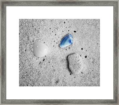 Tiny Sea Shells And A Piece Of Coral In Fine Wet Sand Macro Color Splash Black And White Framed Print