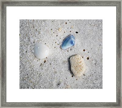 Tiny Sea Shells And A Piece Of Coral In Fine Wet Sand Macro Framed Print by Shawn O'Brien