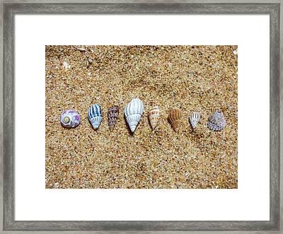 Tiny Seashells On The Sand Framed Print