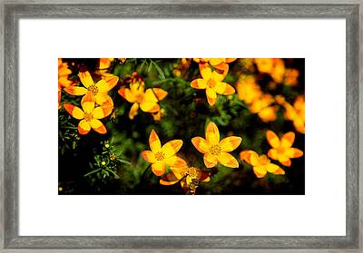 Tiny Suns Framed Print