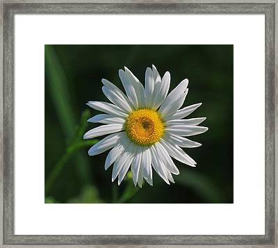 Tiny Sunshine Framed Print by Robert Pearson