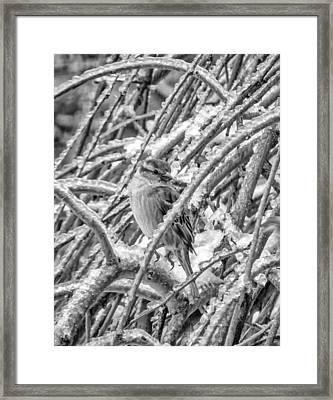 Tiny Survivor Bw Framed Print by Steve Harrington