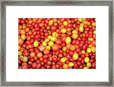 Tiny Tomatoes Framed Print by Todd Klassy