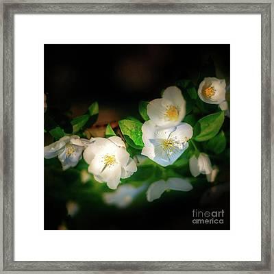 Tiny White Azales Framed Print by Tamyra Ayles