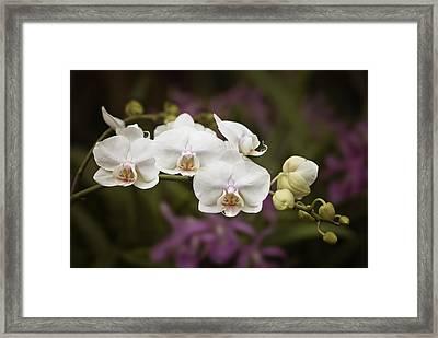 Tiny White Dancers Framed Print