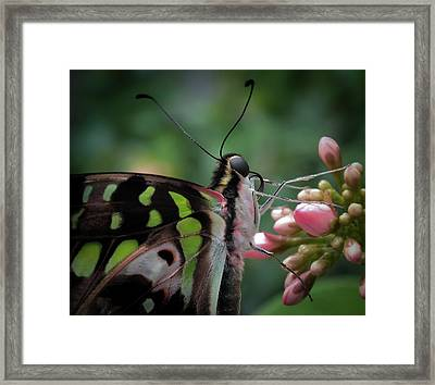 Tiny Wonders Of His Creation Framed Print by Karen Wiles