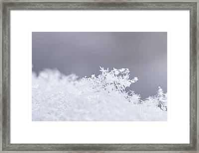 Framed Print featuring the photograph Tiny Worlds I by Ana V Ramirez
