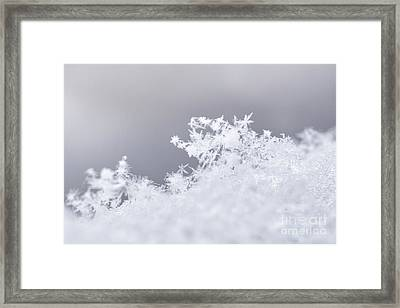 Framed Print featuring the photograph Tiny Worlds II by Ana V Ramirez