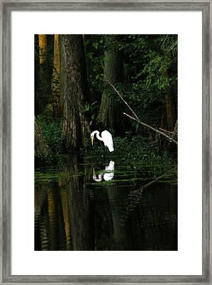 Tiptoe 2 Framed Print by Don Prioleau