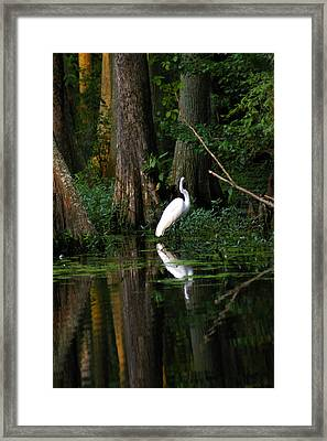 Tiptoe Framed Print by Don Prioleau