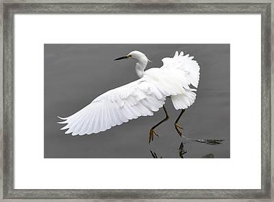 Tiptoe Framed Print by Fraida Gutovich