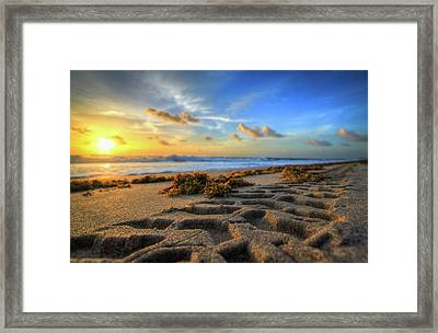 Tire Tracks In Sand Sunrise Framed Print