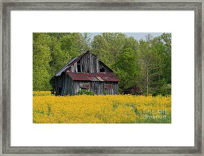 Tired Indiana Barn - D010095 Framed Print by Daniel Dempster