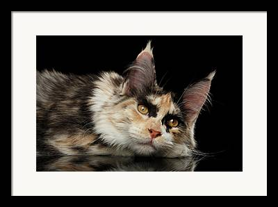 Relaxed Cat Framed Prints