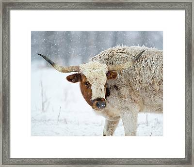 Tired Of Snow Framed Print by Mike Dawson