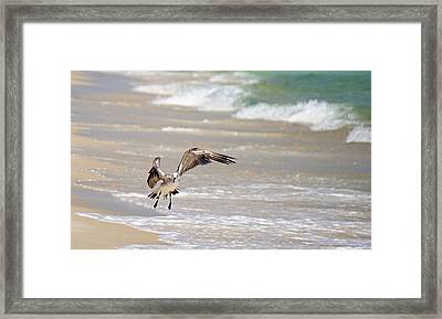 Tired Seagull Framed Print by Brad Zimmerman