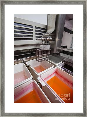 Tissue Staining In Histology Lab Framed Print by Richard T Nowitz