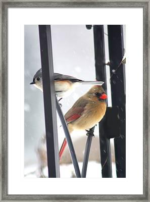 Titmouse And Cardinal Framed Print