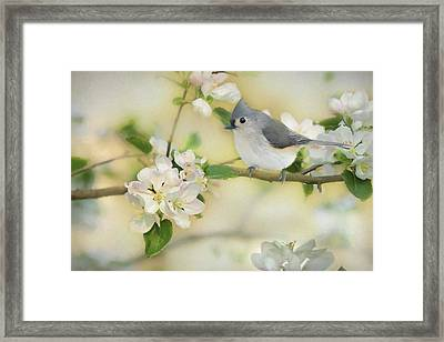Titmouse In Blossoms 2 Framed Print