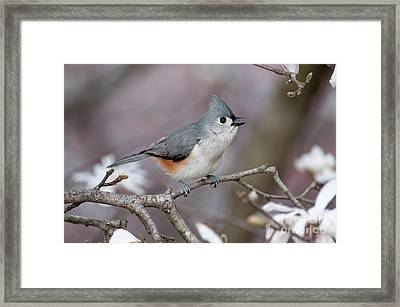 Framed Print featuring the photograph Titmouse Song - D010023 by Daniel Dempster