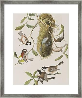 Titmouses Framed Print by John James Audubon