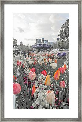 Tivoli Gardens Bring Out Your Reds Oranges Purples Framed Print
