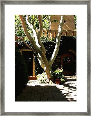 Tlaquepaque Sycamore Framed Print by Fred Wilson