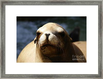 To Bask In Royal Sun Framed Print