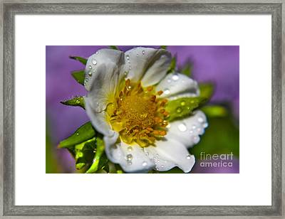 To Be A Strawberry Framed Print