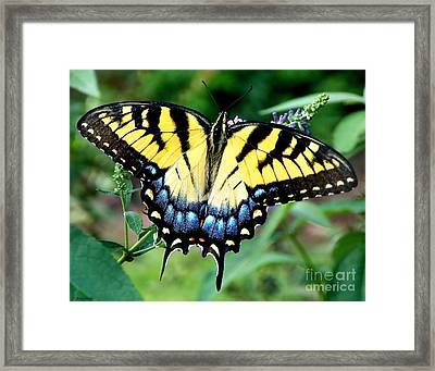 To Be Admired Framed Print by Christy Ricafrente